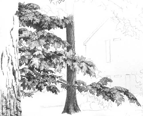DRAWING TREE FOLIAGE part 3 - BALLPOINT PEN DRAWING ...